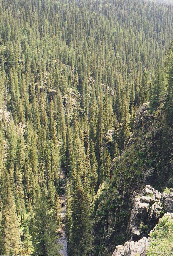 New Mexico mountains  - Pecos Wilderness, near Beatti Cabin 31