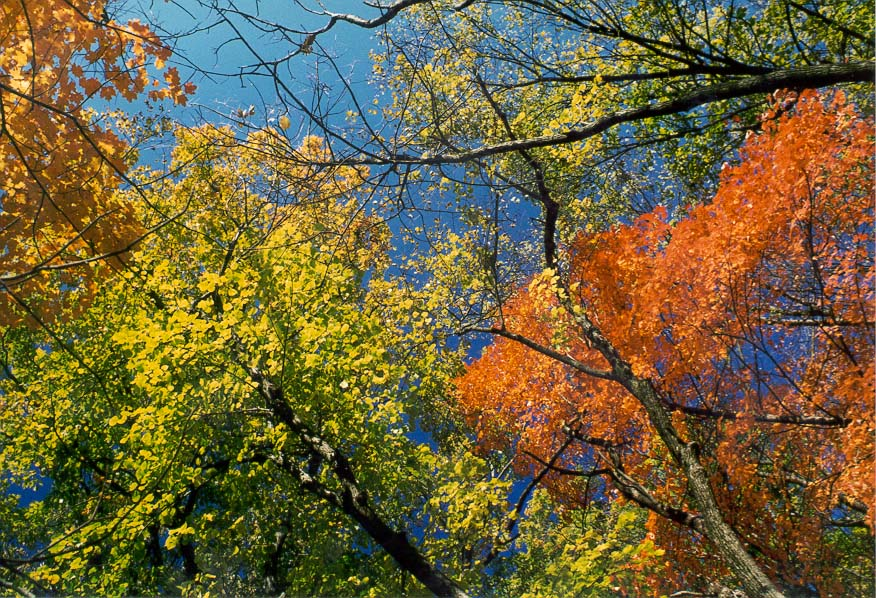 Fall colors in Happy Hollow Park. West Lafayette, Indiana