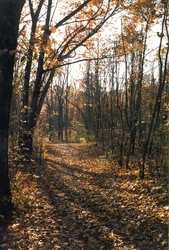 A trail along Wabash River at Ross Hills Park 5 miles west from Lafayette. Indiana