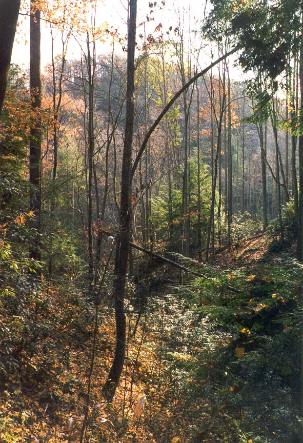 View from Rough Trail. Red River Gorge, Kentucky