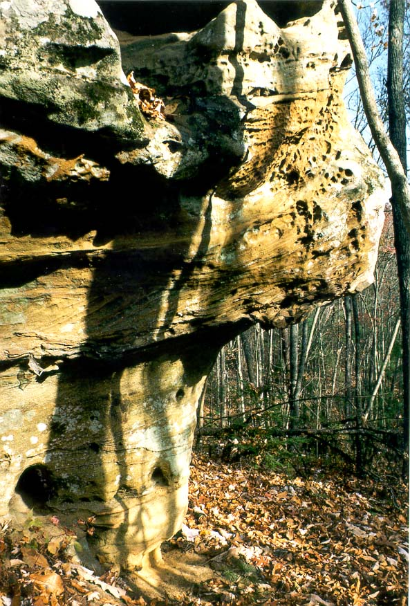 Mushroom-like limestone erosion forms at Koomer Ridge Trail. Red River Gorge, Kentucky