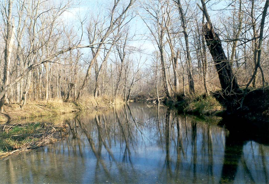 View of a beaver's pond from a beaver's damn across Burnett Creek. Indiana