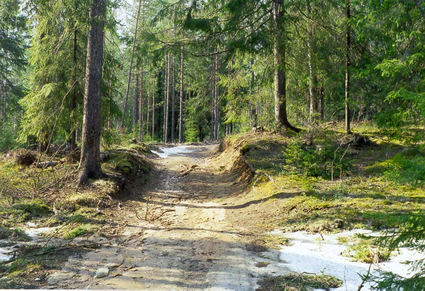 A road through a fir forest covering sandy...miles north from St.Petersburg. Russia
