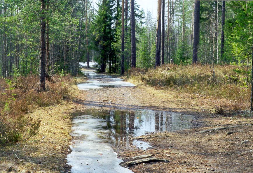 A road in a forest at Karelia Isthmus between...miles north from St.Petersburg. Russia