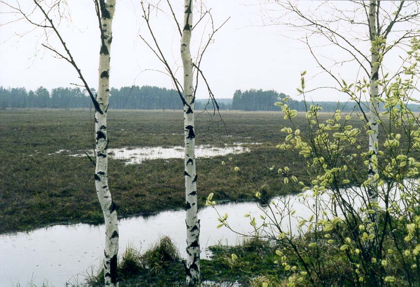 Kavgolovskoe Lake 10 miles north of St.Petersburg...forest is at the background. Russia