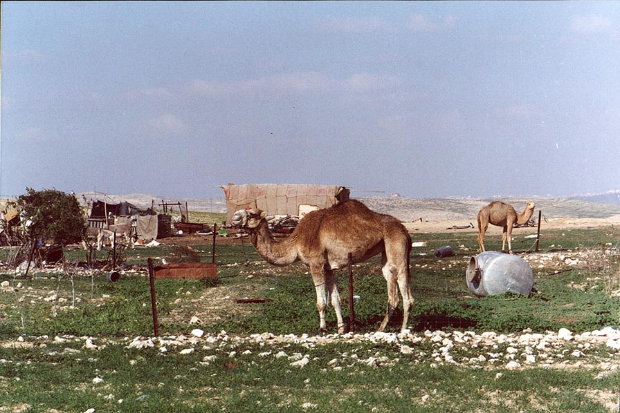 Bedouin settlement 2 miles north-east from Beer-Sheva. The Middle East