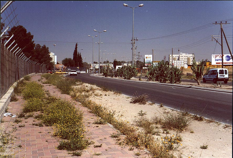 Weeds on Ben Gurion Blvd. at spring. Beer-Sheva, the Middle East