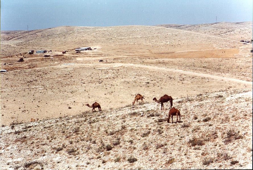 Near Bedouin villages 2 miles north-east from BGU. Beer-Sheva, the Middle East