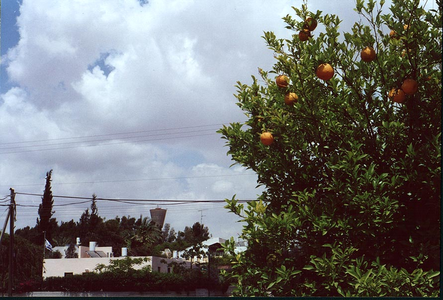 Oranges on a street of Omer, suburb of Beer-Sheva. The Middle East
