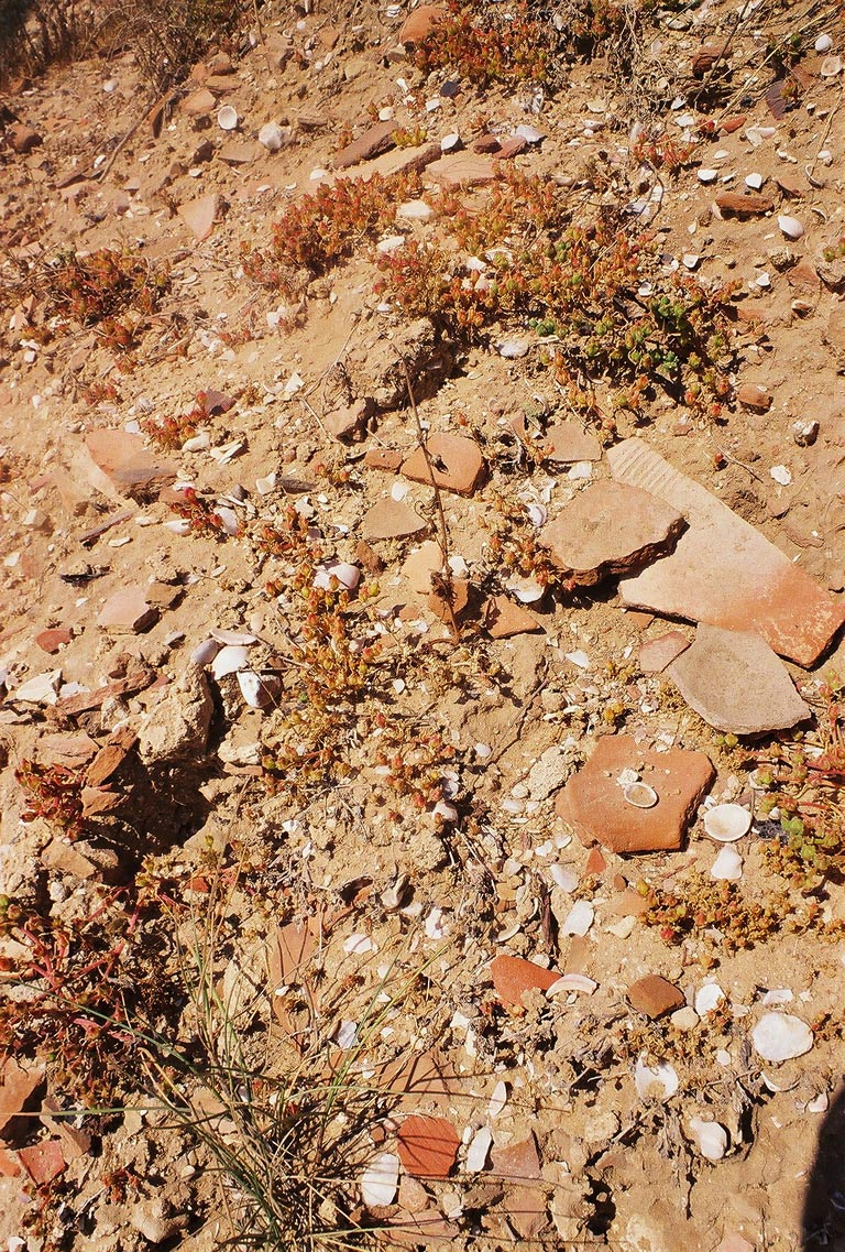 Remains of pottery on a beach. Ashkelon, the Middle East