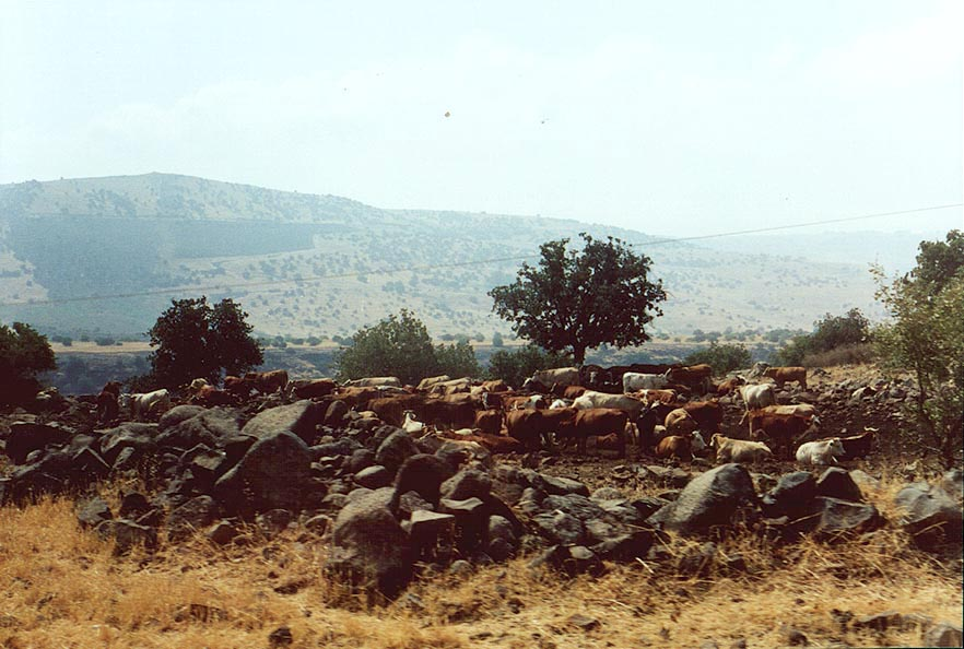 A farm on Golan Heights near Katzrin. The Middle East