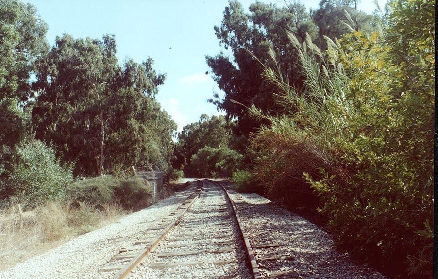 Defunct railroad through lush eucalyptus forest...from Rosh Hanikra. The Middle East