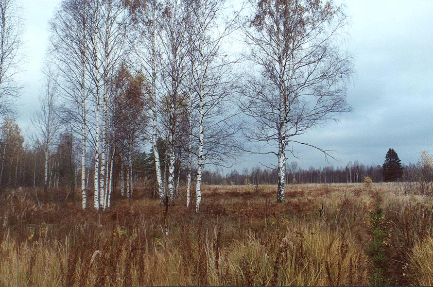 A field 5 mile east from Toksovo, 10 miles north from Sankt Petersburg. Russia