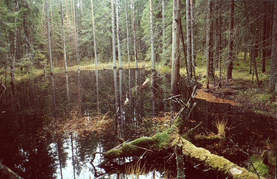 A small lake in fir forest 5 miles east from...north from Sankt Petersburg. Russia