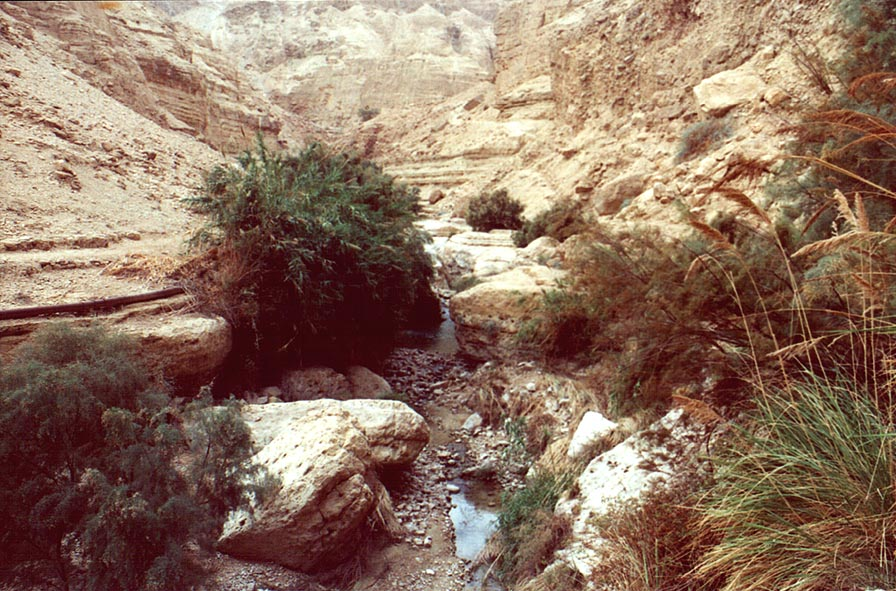 Nahal Arugot. Ein Gedi, the Middle East