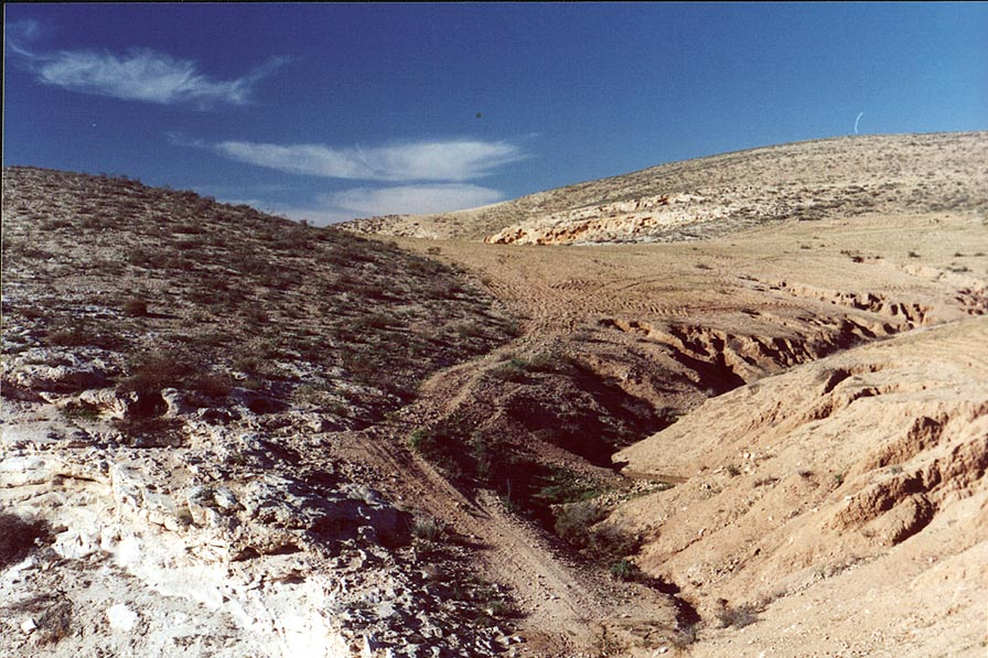 Negev Desert near N. Lahav Nature Reserve, 4 miles north from Beer-Sheva. The Middle East