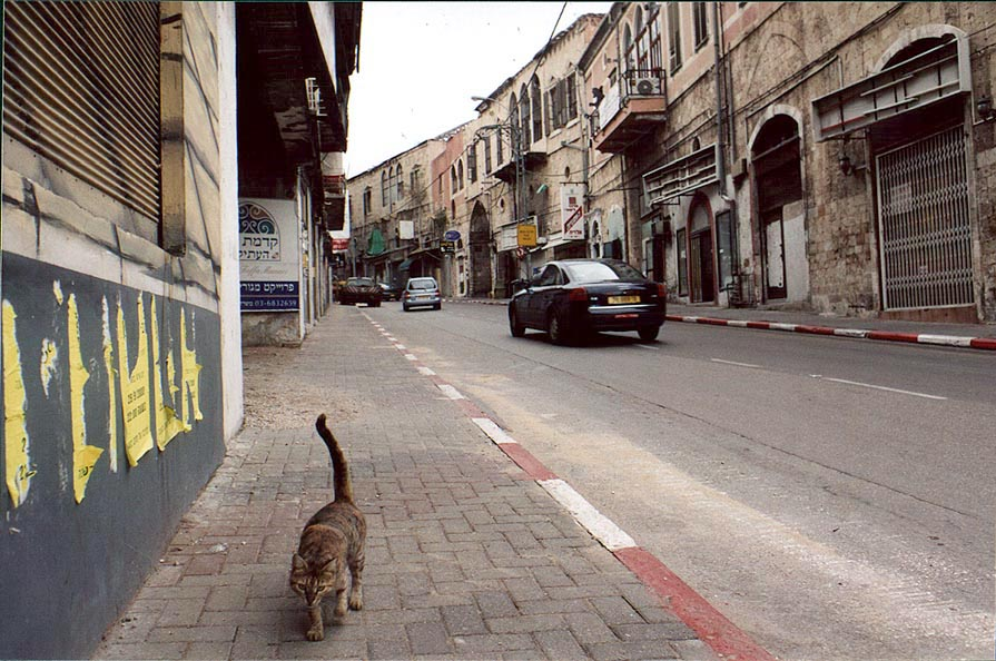 Begging cat on Yefet St. deserted by tourists. Jaffa, the Middle East