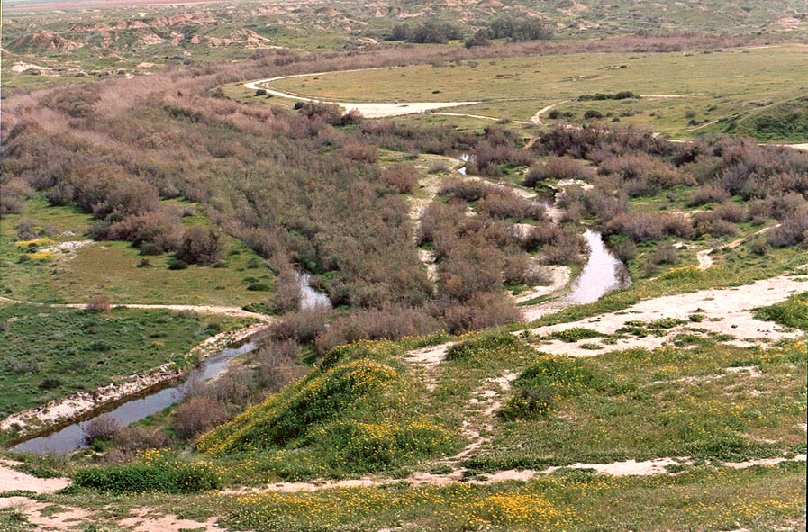 View of Nahal Besor River to the north from Tel...west from Ofakim. The Middle East