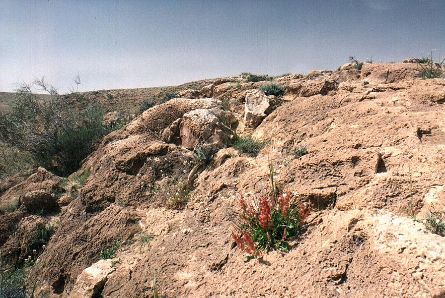 Spring plants in Negev Desert, on a mountain...Yeroham reservoir. The Middle East
