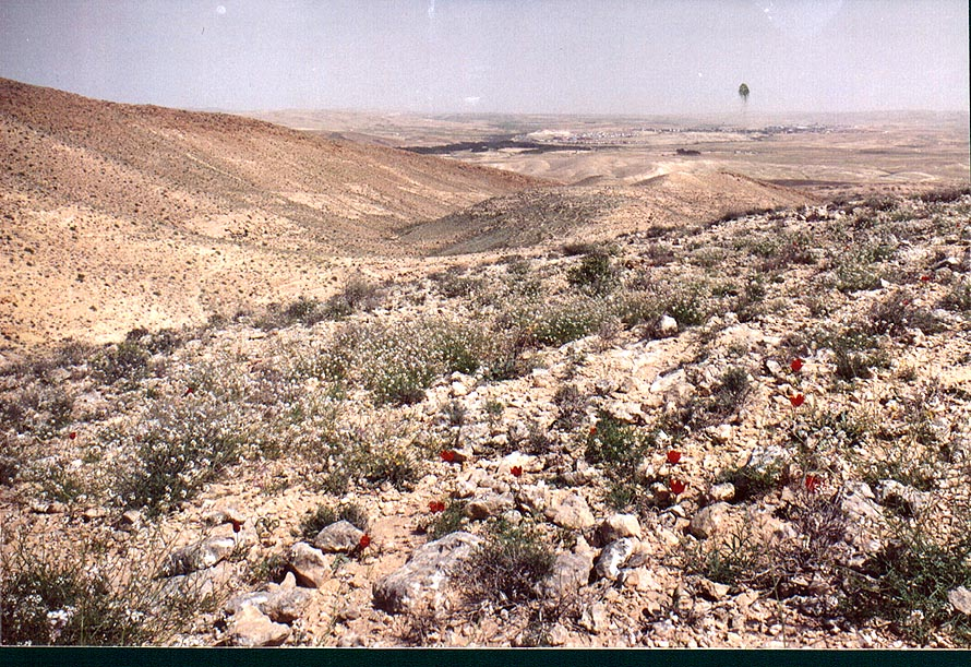 Spring desert near a trail descending from a...to Yeroham reservoir. The Middle East