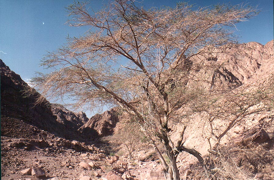 Geological Trail in Timna mountains, near the end. The Middle East
