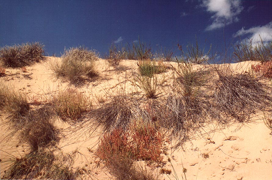 Dunes along a road north from Ashkelon. The Middle East