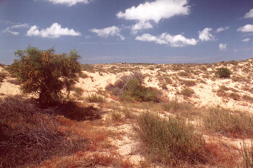 Dunes along a road north from Ashkelon, near Tel...in Nizzanim reserve. The Middle East