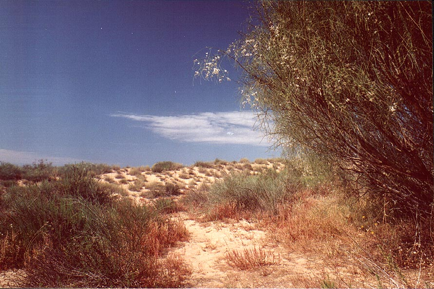Dunes along a road north from Ashkelon, near Tel Poran. The Middle East
