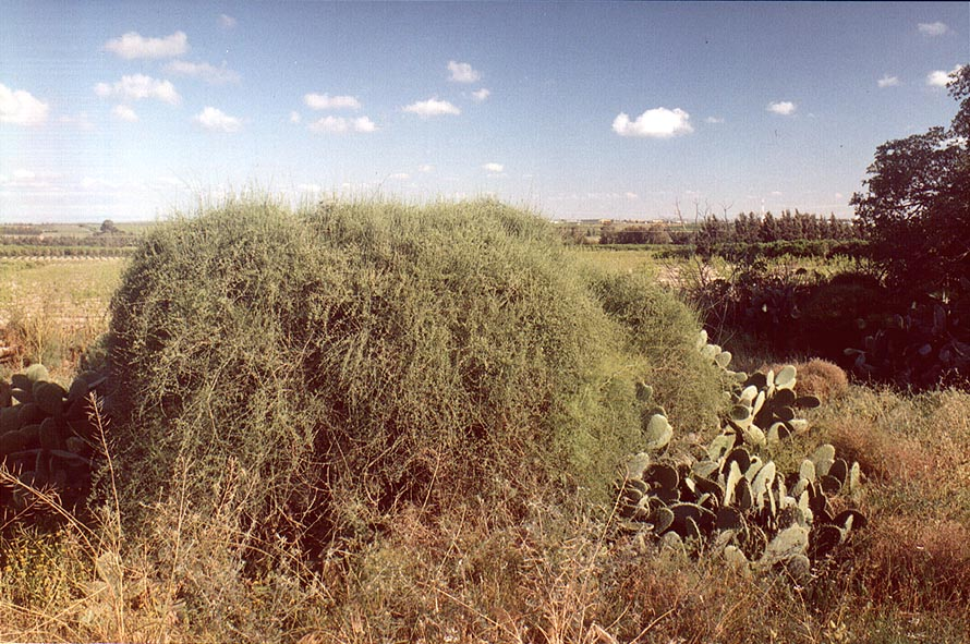 Wasteland in northern Ashkelon. The Middle East