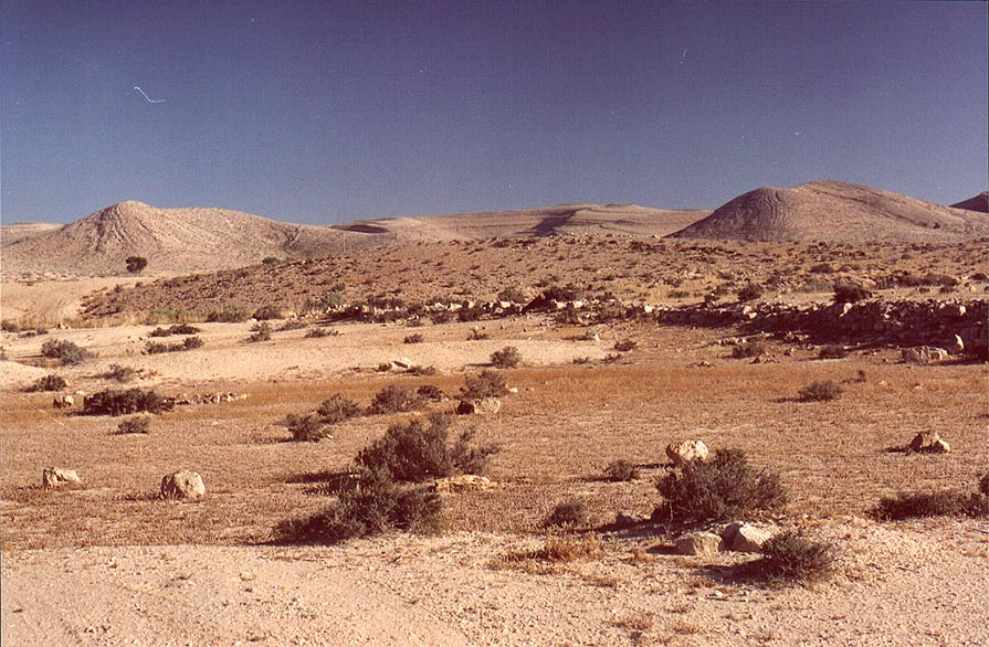 Negev Desert 2.5 miles north-east from Sde Boker at morning. The Middle East