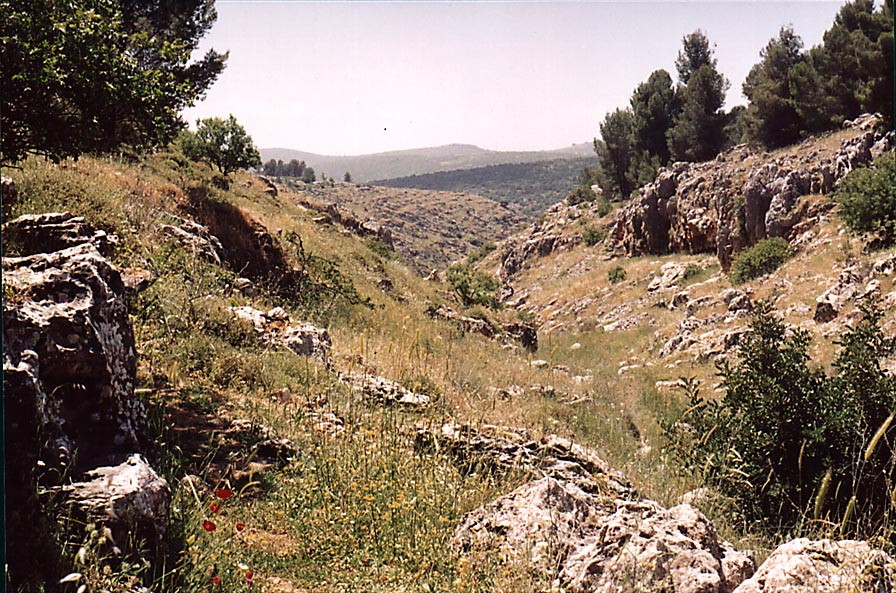 Nahal Sekhvee River north from Safed, landscape...wadi in Upper Galilee. The Middle East
