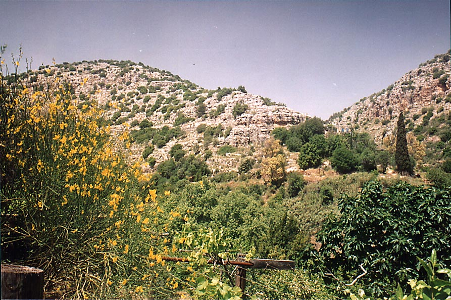 The fruit garden (bustan) watered from a spring...River near Safed. The Middle East