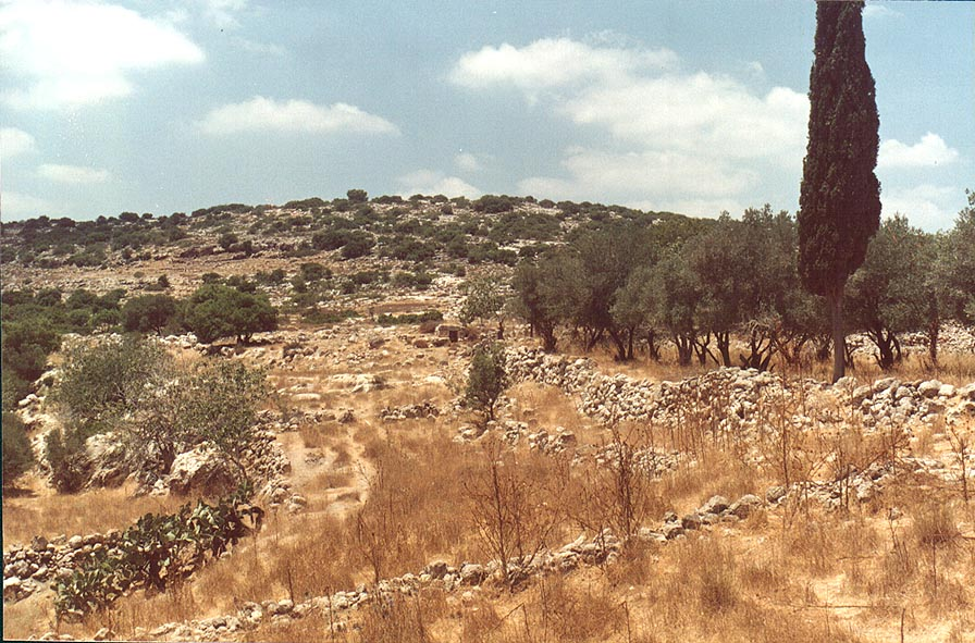 A garden in the abandoned village Soofla, 3 miles east from Beit Shemesh. The Middle East