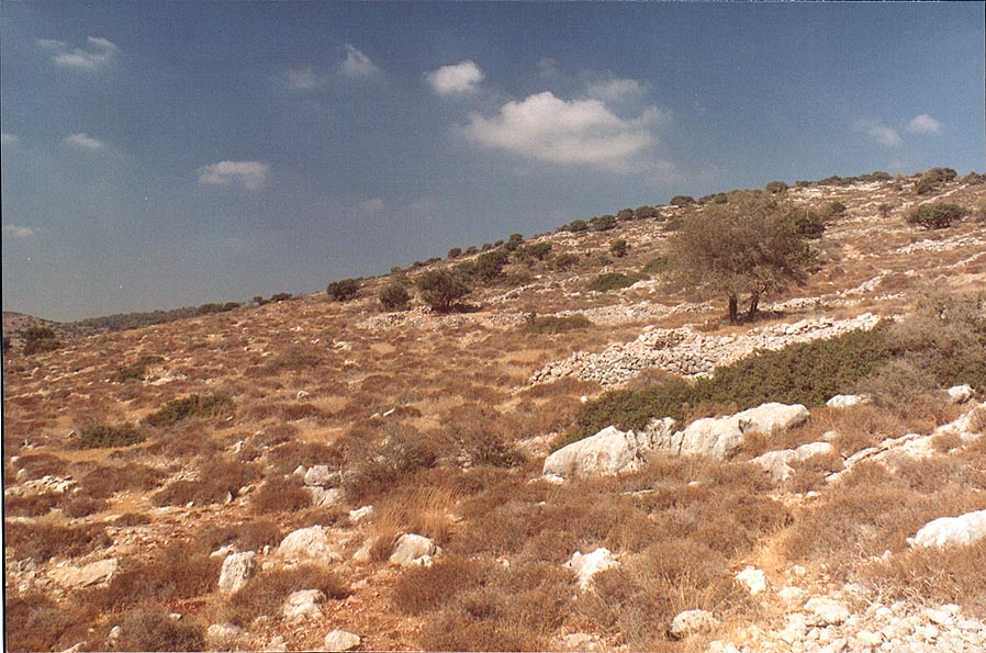 Remains of settlements and gardens on slopes of...from Beit Shemesh. The Middle East