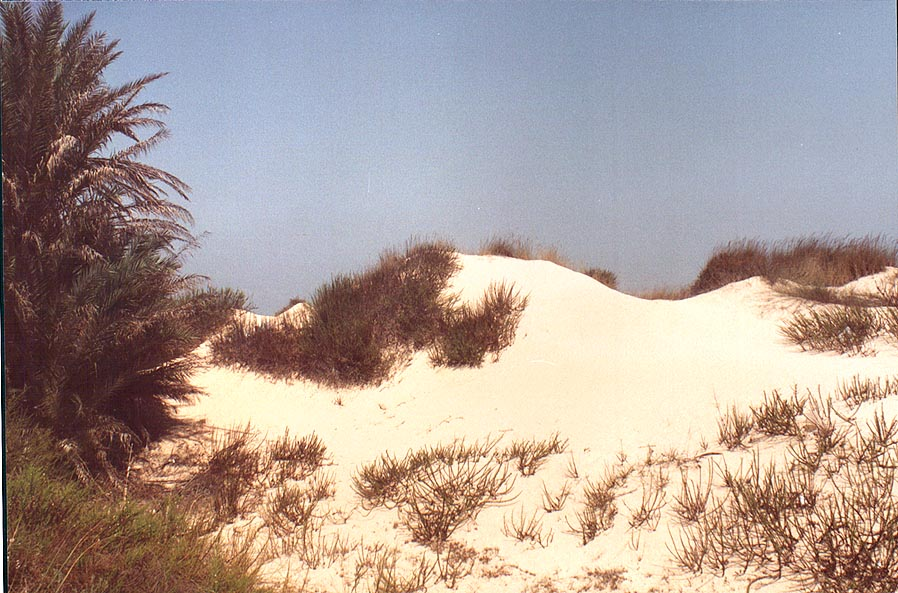 Jerusalem - Nizzanim  - Dunes of Nizzanim. The Middle East