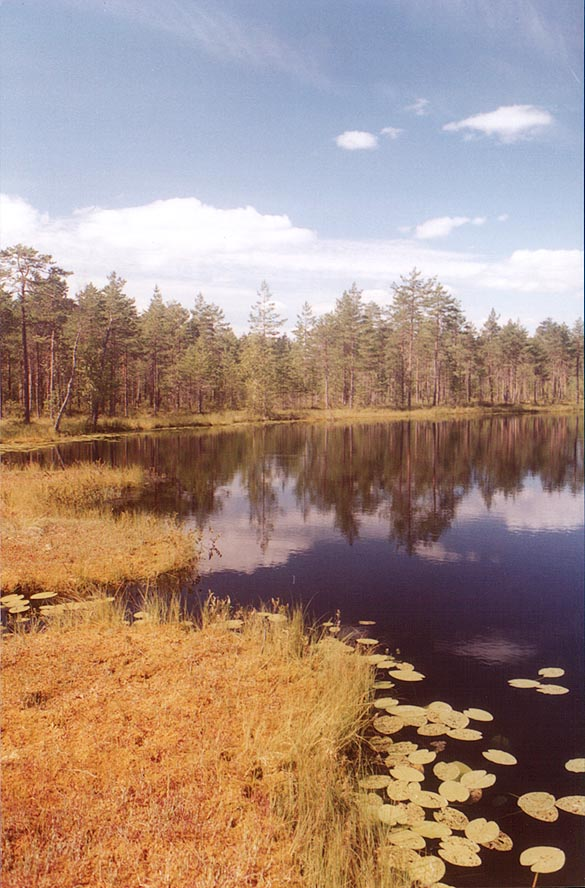 A lake in a marshy forest near Orekhovo, 40 miles north from St.Petersburg. Russia
