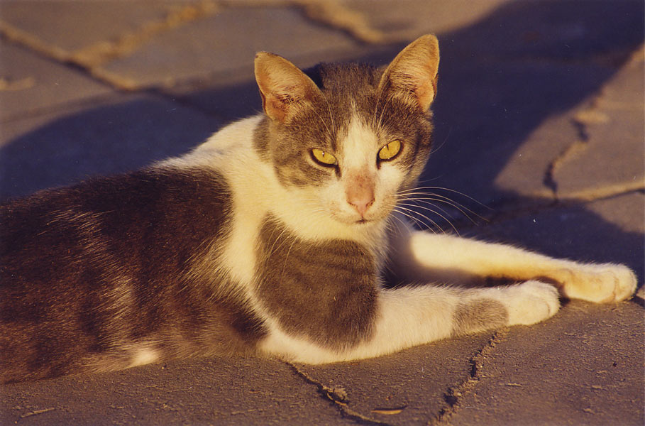 A cat warming at evening sun in Shekhuna Dalet neighborhood. Beer-Sheva, the Middle East