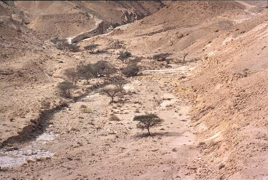 Acacias along Tsafit Creek 11 miles west from...from Arava junction. The Middle East