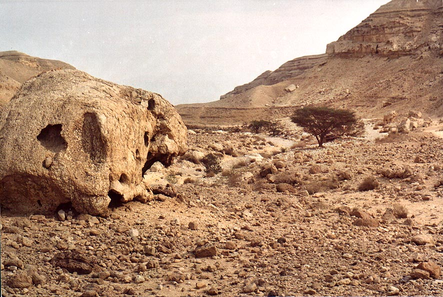 A skull shaped stone in a wide part of lower...from Arava junction. The Middle East