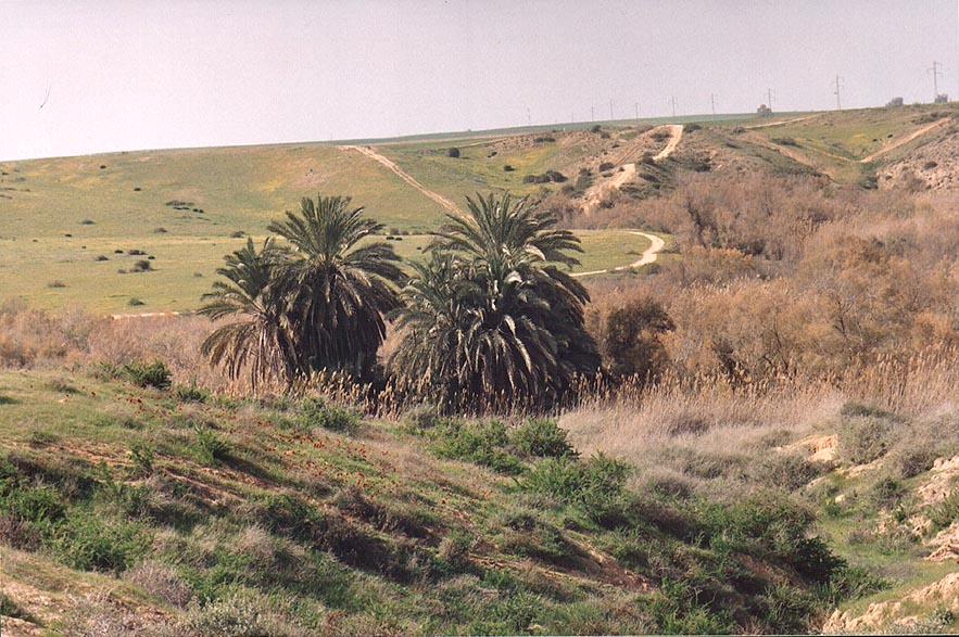 Be'er Sharuhen well (Bir e-Shalala) under palm...west from Ofakim. The Middle East