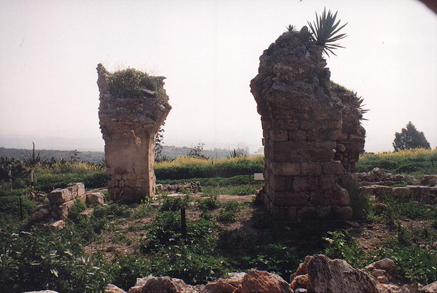 A garden on Mount Carmel near Zikhron Ya'akov. The Middle East