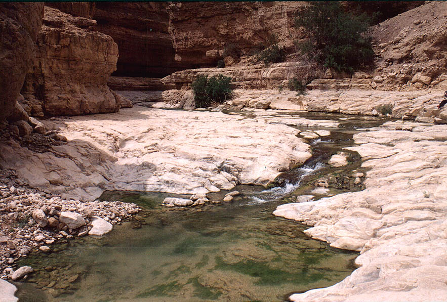 Springs of upper pools of Nahal Arugot river in Ein Gedi park. The Middle East