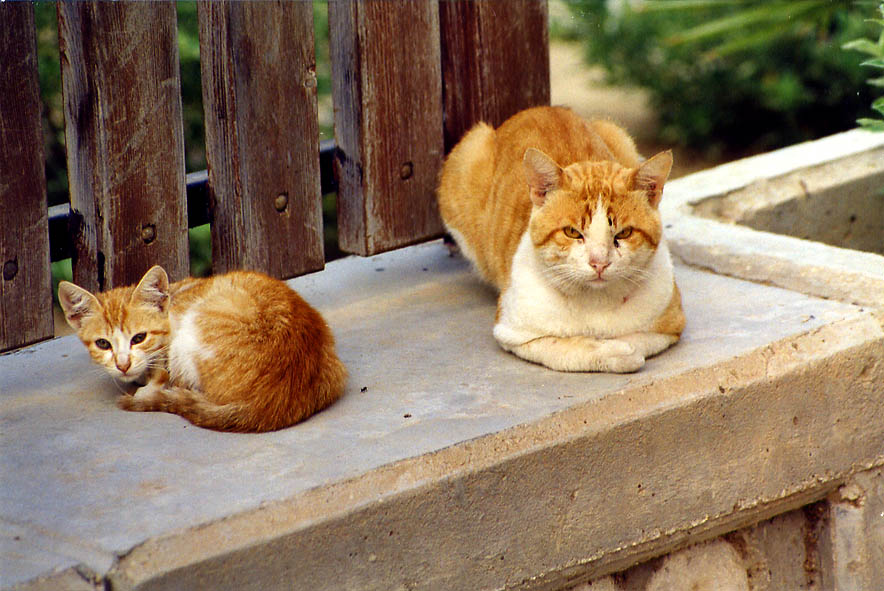 Stray cats in Shekhuna Gimmel neighborhood. Beer-Sheva, the Middle East