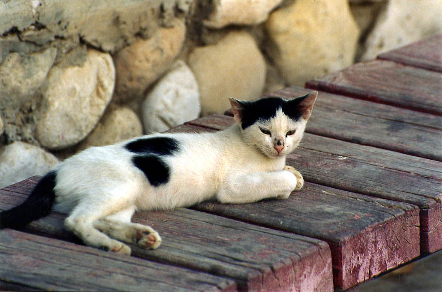 Stray cat in Shekhuna Gimmel neighborhood. Beer-Sheva, the Middle East