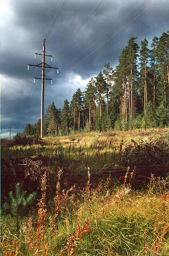 Transmission line right of way in a forest near...miles north from St.Petersburg, Russia