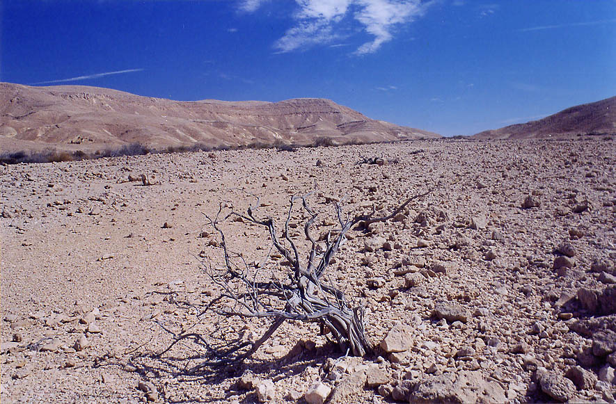 Desert plateau near Mount Berekh west from Timna...north from Eilat. The Middle East