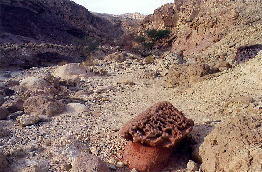 Morel-like red sandstone erosion below western...north from Eilat. The Middle East