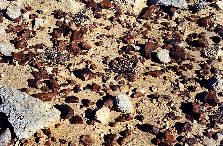 Flint stones of a plateau of Negev desert 1.5...College at Sde Boker. The Middle East