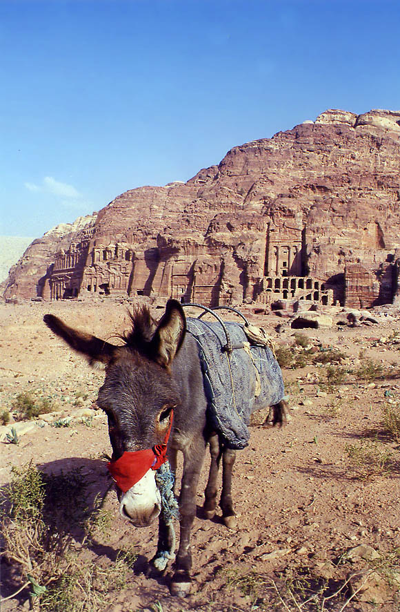 A Bedouin donkey near Royal Tombs. Petra, Jordan