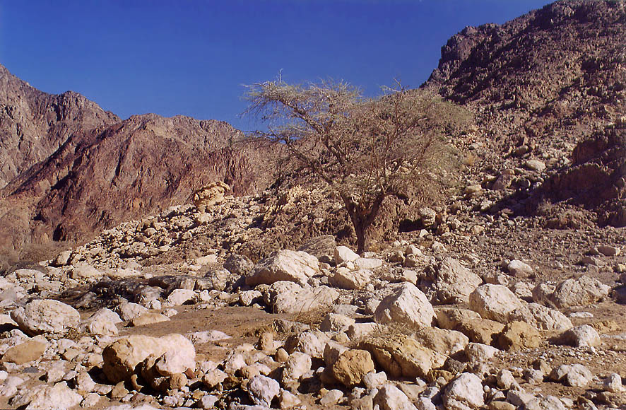 Wadi Netafim north from Eilat. The Middle East